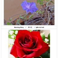 Flashcards on Flowers  (Free printable)